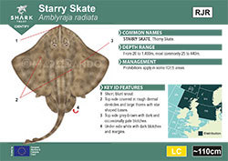 Starry Skate Pocket Guide (pdf)