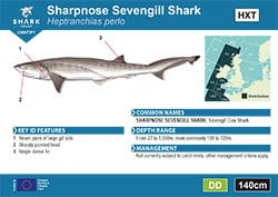 Sharpnose Sevengill Shark Pocket Guide (pdf)