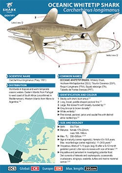 Oceanic Whitetip Shark ID Guide (pdf)