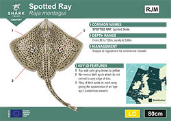 Spotted Ray Pocket Guide (pdf)