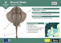 Round Skate Pocket Guide (pdf)