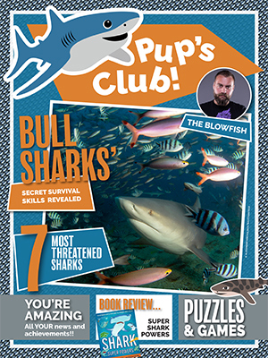 Cover of Shark Focus Magazine #65 (Pups Club)
