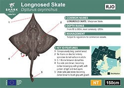 Longnosed Skate Pocket Guide (pdf)