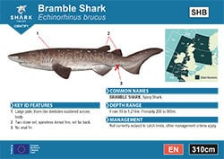 Bramble Shark Pocket Guide (pdf)