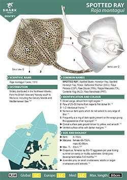 Spotted Ray ID Guide (pdf)
