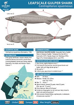 Leafscale Gulper Shark ID Guide (pdf)