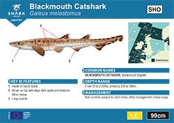 Blackmouth Catshark Pocket Guide (pdf)