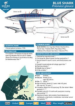 Blue Shark ID Guide (pdf)