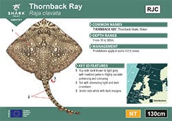 Thornback Ray Pocket Guide (pdf)