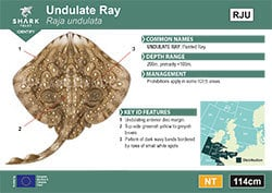 Undulate Ray Pocket Guide (pdf)