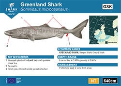 Greenland Shark Pocket Guide (pdf)