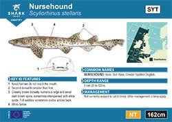 Nursehound Pocket Guide (pdf)