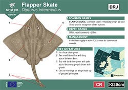 Flapper Skate Pocket Guide (pdf)