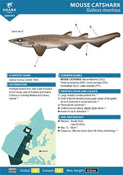 Mouse Catshark ID Guide (pdf)