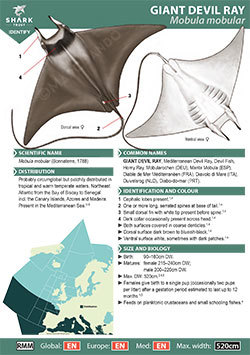 Giant Devil Ray ID Guide (pdf)