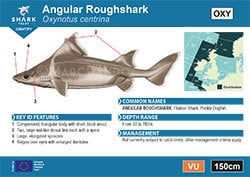 Angular Roughshark A6 Pocket Guide (pdf)