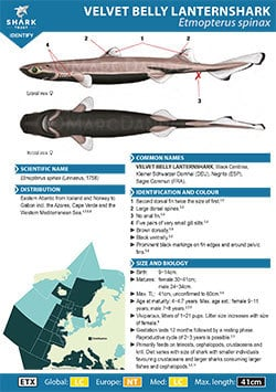 Velvet Belly Lanternshark ID Guide (pdf)