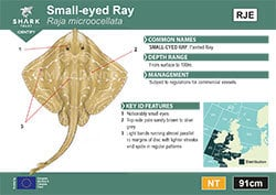 Small-eyed Ray Pocket Guide (pdf)
