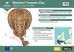 Marbled Torpedo Ray Pocket Guide (pdf)