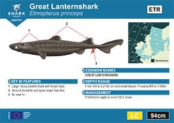 Great Lanternshark Pocket Guide (pdf)