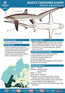 Bigeye Thresher Shark ID Guide (pdf)
