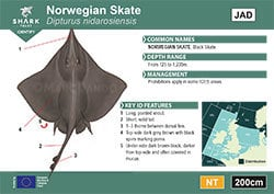 Norwegian Skate ID Guide (pdf)