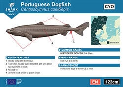 Portuguese Dogfish Pocket Guide (pdf)
