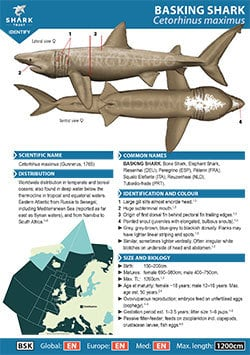 Basking Shark ID Guide (pdf)