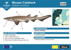 Mouse Catshark Pocket Guide (pdf)