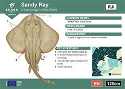 Sandy Ray Pocket Guide (pdf)