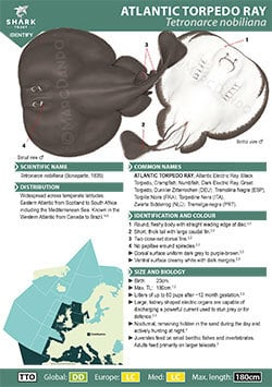 Atlantic Torpedo Ray ID Guide (pdf)