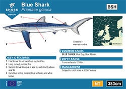 Blue Shark Pocket Guide (pdf)