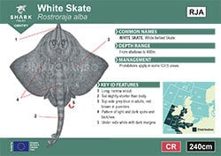 White Skate Pocket Guide (pdf)