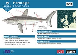 Porbeagle Pocket Guide (pdf)