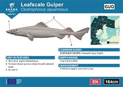 Leafscale Gulper Shark Pocket Guide (pdf)