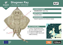 Shagreen Ray Pocket Guide (pdf)
