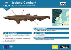 Iceland Catshark Pocket Guide (pdf)