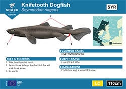 Knifetooth Dogfish Pocket Guide (pdf)