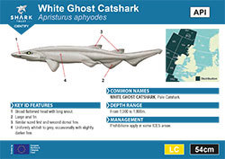 White Ghost Catshark Pocket Guide (pdf)