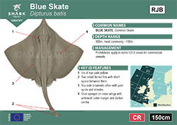 Blue Skate Pocket Guide (pdf)