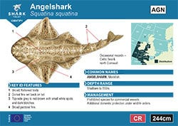 Angelshark A6 Pocket Guide (pdf)