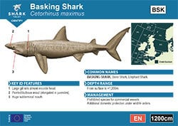 Basking Shark A6 Pocket Guide (pdf)