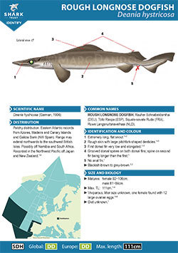 Rough Longnose Dogfish ID Guide (pdf)