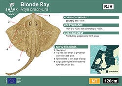 Blonde Ray Pocket Guide (pdf)