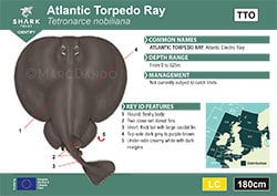 Atlantic Torpedo Ray Pocket Guide (pdf)
