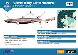 Velvet Belly Lanternshark Pocket Guide (pdf)