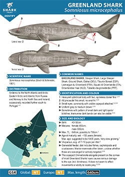 Greenland Shark ID Guide (pdf)