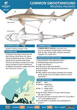 Common Smoothhound ID Guide (pdf)
