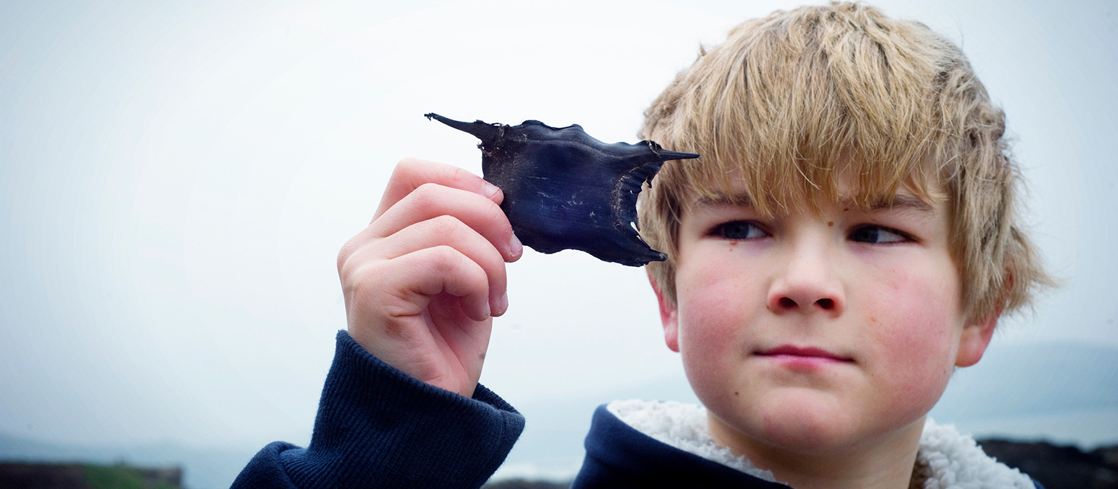 Great Eggcase Hunt Appeal