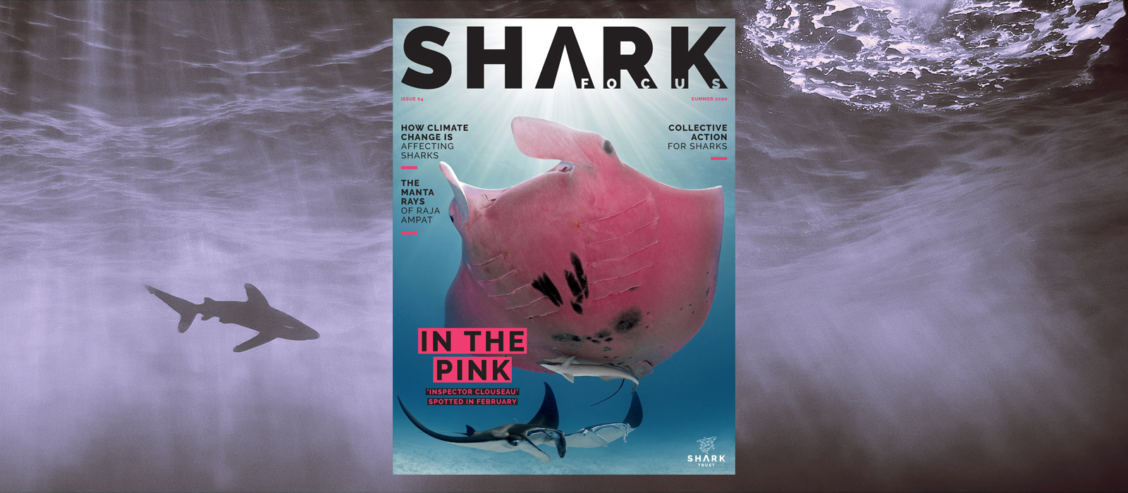 Shark Focus 64 cover features pink Manta Ray © Kristian Laine Photography. Background photo of ocean scene with shark © Magnus Lundgren.